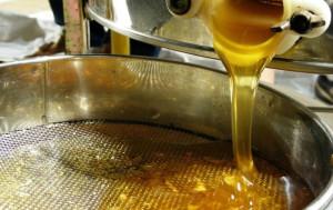 """""""Il miele può curare tosse e raffreddore meglio rispetto agli antibiotici"""", lo afferma una ricerca"""