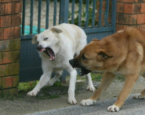 Tragedia nella Pineta di Satriano, cani aggrediscono anche carabinieri e vigili urbani