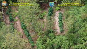 Scoperte in Calabria 8 piantagioni di marijuana con il telerilevamento aereo