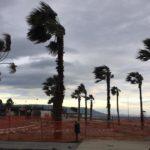 Soverato – Le palme trapiantate sul lungomare nuovo attecchiranno?