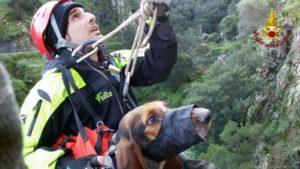 Recuperato dai vigili del fuoco un segugio da caccia