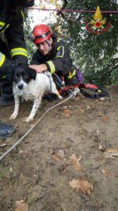 Recuperato dai VdF un cucciolo Bretone caduto in un dirupo