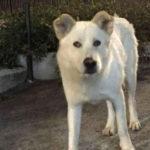 Massacrano un cane e postano il video sul web, rinviati a giudizio