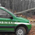 Serra San Bruno – Furto di legna, arresto e sequestro di 100 quintali