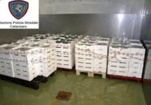 Sequestrati dalla Polstrada di Catanzaro 900 kg di bianchetto