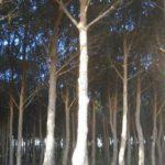 """Soverato – Sistemazione pineta """"Corvo"""" e vivaio"""