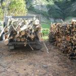 Rubata legna da un bosco nel catanzarese, due denunciati