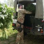 Coltivava piantagione con 975 piante di marijuana, 39enne arrestato