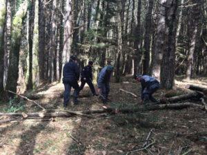 Sorpreso dai Carabinieri mentre taglia alberi, arrestato