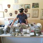 Serra di marijuana in casa, all'interno 2 chili di erba