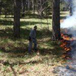 Incendio boschivo nel catanzarese, agricoltore denunciato