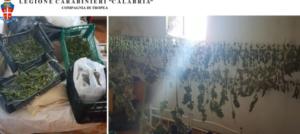 Scoperto deposito con 12 chilogrammi di marijuana pronta per lo spaccio