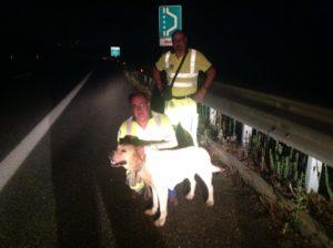 Labrador ritrovato sull'A2 Autostrada Del Mediterraneo in Calabria