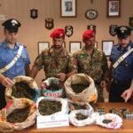 Trovati dai carabinieri 9 chili di marijuana e armi