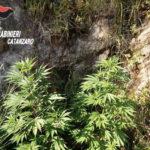 Coltivava marijuana in un allevamento di trote, arrestato un 57enne a Cenadi