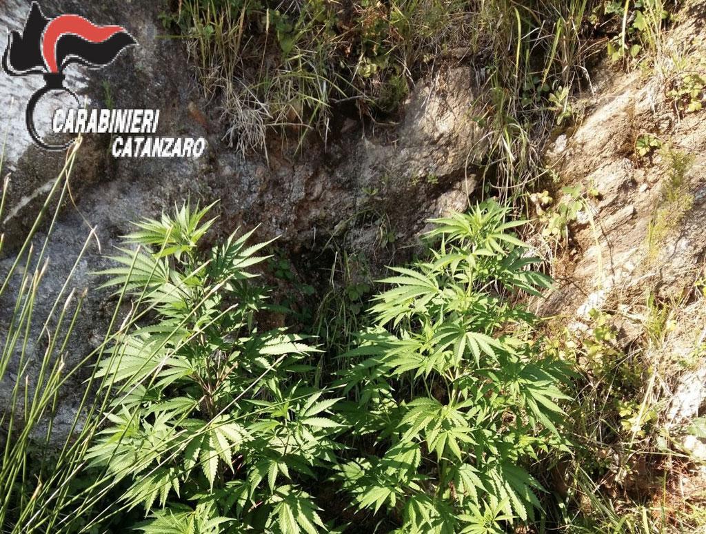 Coltivava marijuana in un allevamento di trote arrestato for Vasche per allevamento trote