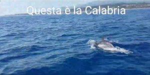 VIDEO | Straordinario incontro con decine di delfini nel mare di Soverato