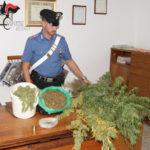 Chiaravalle – Scoperto laboratorio di marijuana in terreno agricolo, 50enne arrestato