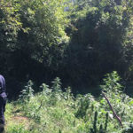 Sequestrata una piantagione di marijuana da un milione di euro
