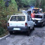 Coldiretti Calabria – Emergenza cinghiali, dipartimento agricoltura proceda a rimborsare danni subiti