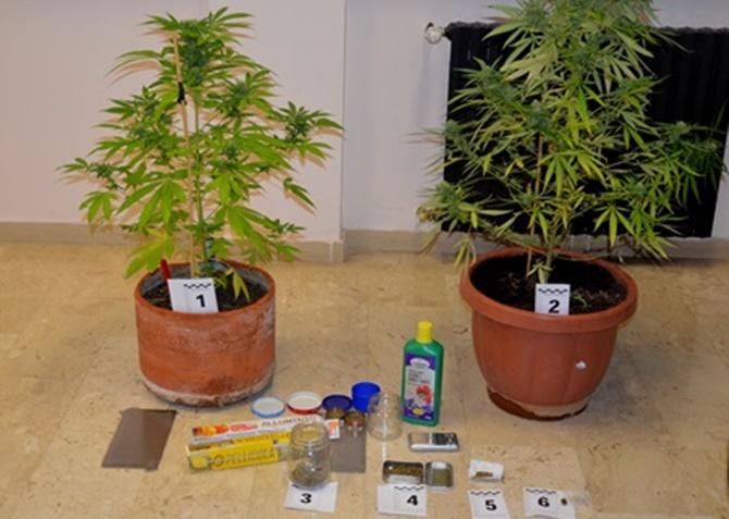 Sul balcone avevano due piante di marijuana in arresto - Fratelli ingegnoli piante ...
