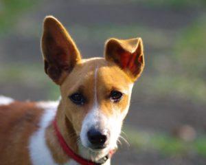 Smarrita sul lungomare di Davoli una cagnolina di piccola taglia