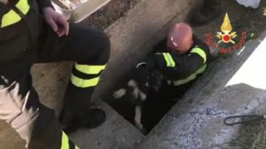 Salvato un cucciolo randagio a Catanzaro Lido