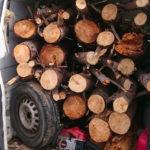 Borgia – Sorpreso mentre ruba legna in pineta, 52enne arrestato