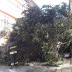 Il forte vento persiste sulla provincia di Catanzaro