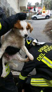 Cucciolo finisce in un tombino, salvato dai Vigili del Fuoco