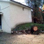 Maltempo – Caduta alberi e coperture pericolanti per il forte vento nel catanzarese