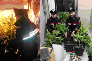 Teneva una serra di marijuana in casa, 30enne arrestato