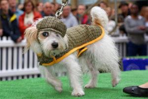 Montauro – Domenica 18 Febbraio sfilata amatoriale canina in maschera