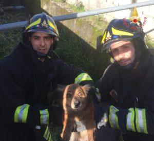 Cucciolo finisce in un canale, recuperato dai Vigili del Fuoco