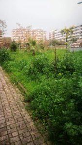 """Catanzaro – """"Nell'assoluto degrado i giardini dei frutti antichi del quartiere Corvo"""""""