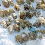 Traffico di organi? 54 mani mozzate ritrovate nella neve