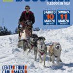 Torna nel Parco Nazionale della Sila lo Sleddog, la corsa con cani da slitta più a sud d'Europa
