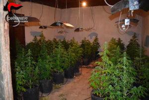 Capannone industriale trasformato in piantagione di marijuana, 46enne arrestato