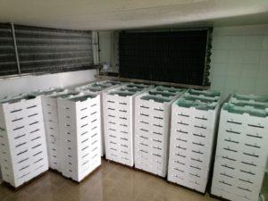 Trasportava 200 cassette di bianchetto con il furgone sulla Ss 106, multa da 25mila euro