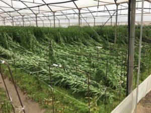 Danni ingenti per il forte vento alle strutture serricole e alle colture