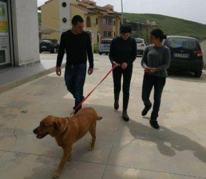 Al Centro Diurno Ra.Gi. parte il percorso di Pet Therapy con il labrador Lady