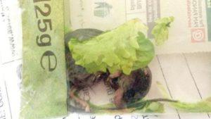Mangiano insalata in busta e dopo ci trovano topo morto dentro, lotto ritirato dagli scaffali