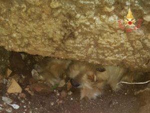 Cane incastrato sotto un lastrone di cemento, salvato dai Vigili del Fuoco