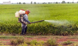 Studio shock: i pesticidi possono causare il morbo di Parkinson nei soggetti predisposti