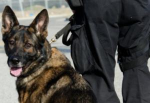 Poliziotto lascia il cane due ore nell'auto di servizio, morto