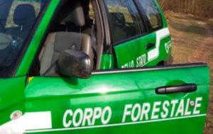 Avrebbe favorito cosca 'Ndrangheta, arrestato maresciallo dei carabinieri forestali