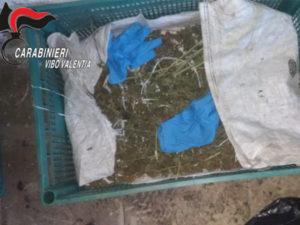Scoperte dai Carabinieri due piantagioni di canapa indiana