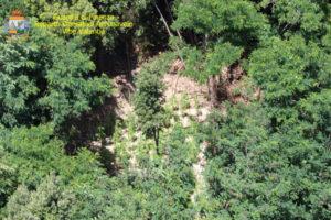 Scoperta piantagione di canapa indiana, sequestrate oltre 130 piante