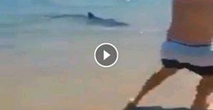 VIDEO | Panico in Calabria, grosso squalo arriva sino alla battigia