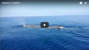 VIDEO |  Calabria, balena avvistata in mare